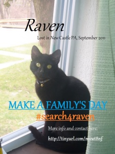 Lost Cat in New Castle, PA. Please help by pinning this! Read more about Raven by clicking on the image.
